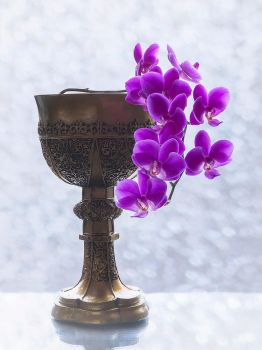 Orchid branch in the goblet by Daykiney