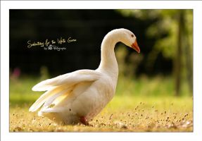 Sunbathing for the White Goose by sG-Photographie