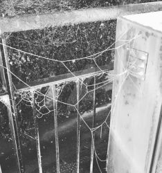 Spider Cobweb And Frost. (29/12/16) by EdenLeeRay