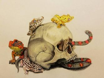Reptiles and a skull by raquelravage