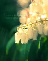 The Sound of the White Bells by TammyPhotography