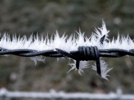 Frozen Barbed Wire by Ruumisauto