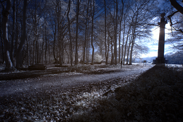 Ashridge in Infrared 4 by bmh1