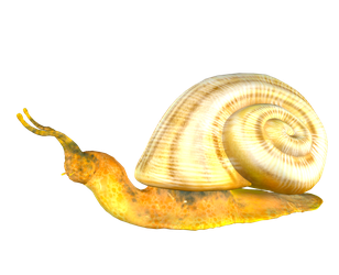 STOCK PNG snail2 by MaureenOlder