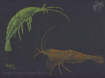 Inktense Test - Shrimp by R-Eventide