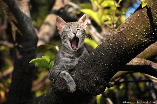 This is my tree! by ZoranPhoto