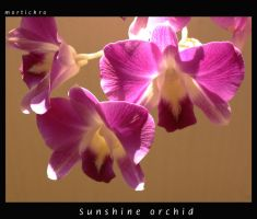The orchid of sunshine by mortichro