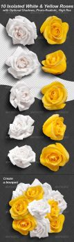 10 Photo-Realistic Isolated White and Yellow Roses by Ondrejvasak