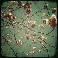 The Blossom by MisoJace