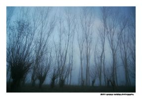 Mistery forest by geographu
