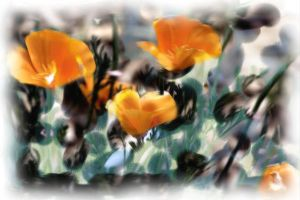 Poppies by diverse-norm
