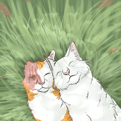 Brightheart, not Lostface. by siljegull
