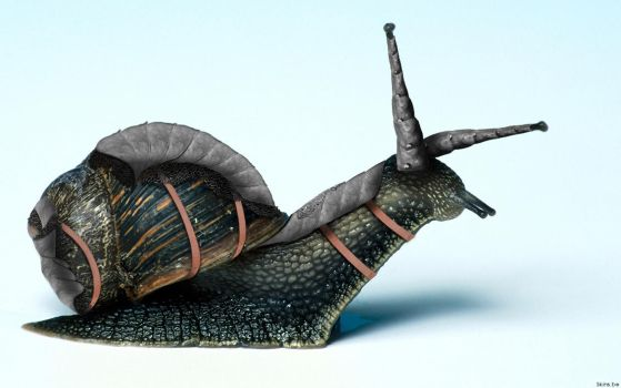 -- Snail -- by 0l-Fox-l0