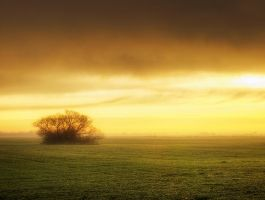 Morning gold III. by realityDream