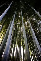 Bamboo by jeffdkennel