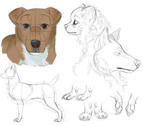 Dog anatomy practice by th1stlew1ng