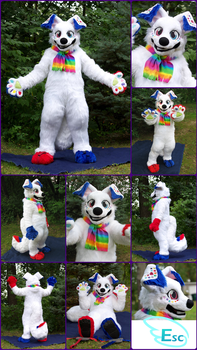 Colours the Canine (Spitz Dog Mix) Fursuit (2017) by Eternalskyy