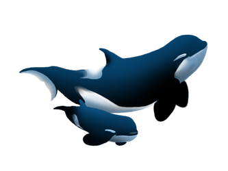 Type D Orcas Killer Whale by WeisseEdelweiss