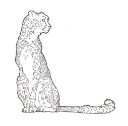 Cheetah Lineart 2 by ReQuay