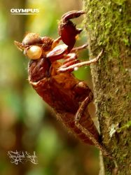 P4198704_Insect Exoskeleton by jitspics