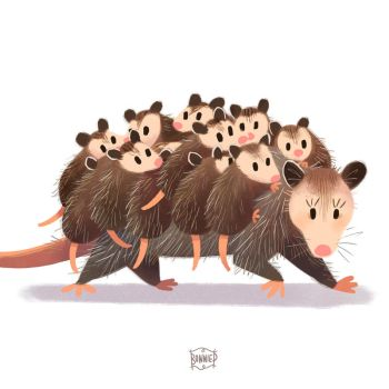 North American Opossum Mum by l3onnie