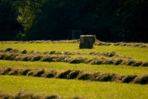 Straw Bale and grass by LoveForDetails