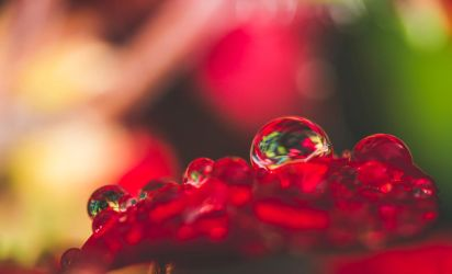 red passion II by MarcosRodriguez