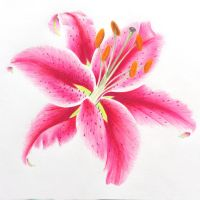 Lilium by l-Zoopy-l