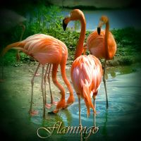 Flamingo by inObrAS