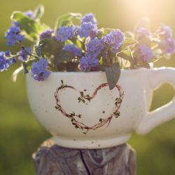 a cup of forget-me-not tea by LenaCramer