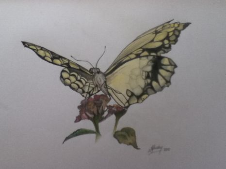 Yellow Butterfly by Mousley