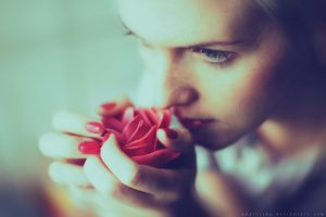 Red rose by Basistka