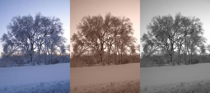 Snow Covered Tree - Triptych by RainbowPickle