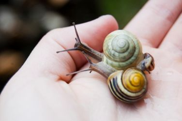 Just some snails by Monkey-D-Zoe