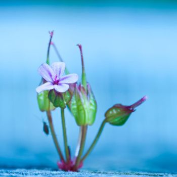 Its the little things by pqphotography