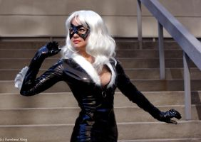 Black Cat 7 by AlisaKiss