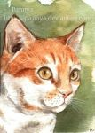 Murry cat ACEO by Pannya