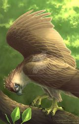 Philippine Eagle by Nambroth
