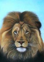 Lion - The majesty by Vishvesh99