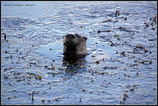 ozzy otter by photom17