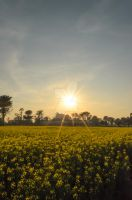 Sunset at a rapeseed field by MrHighsky