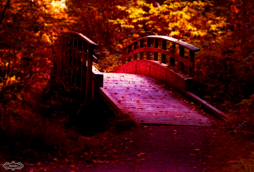 Forest Bridge by Deirdre-T
