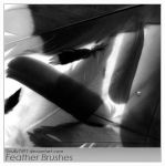Feather Brushes by Scully7491