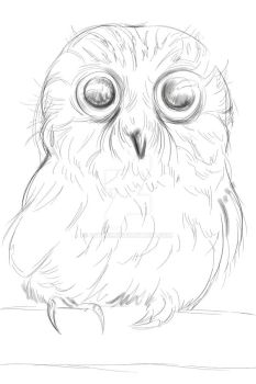 poor owl - process (GIF) by 4steex