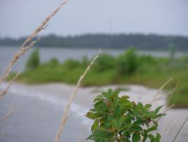 Little Beach Plant Growth by ravinniaofcreed