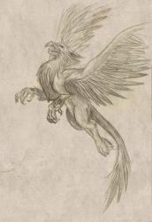 Griffin - flight by after-the-fire-storm