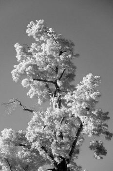 White Leaves and a bright Sky 2 by PEACEBRAKER