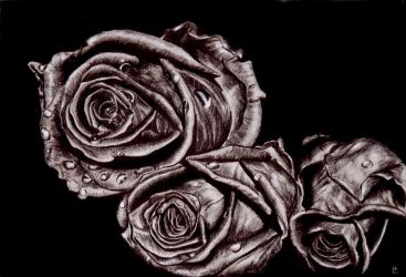 roses by tooth-chocolate