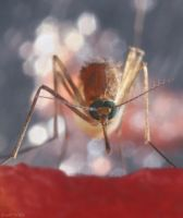 Mosquitoes dig Watermelons by HONEST-STYLE