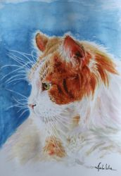 Kitty by danuta50